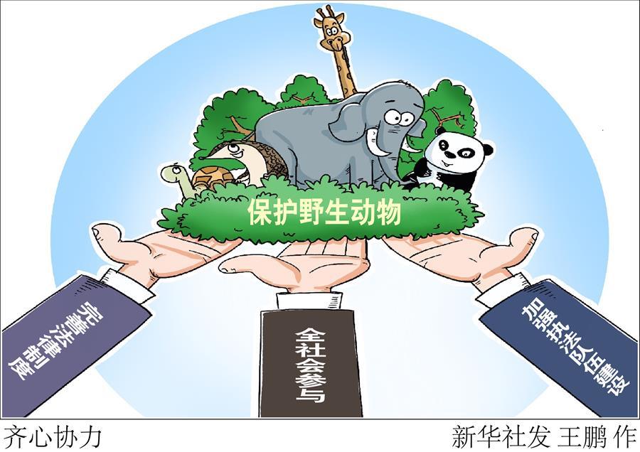(圖表·漫畫)〔新華調查·聚焦野生動物保護〕齊心協力