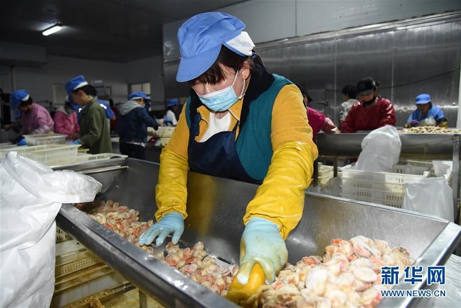 (走向我們的小康生活·圖文互動)(7)長島漁民的扇貝喜事:從請客求人買到供不應求