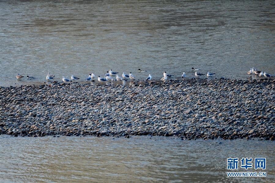 (新华全媒头条·图文互动)(9)黄河之水 兰州之美——黄河兰州段生态保护和高质量发展见闻