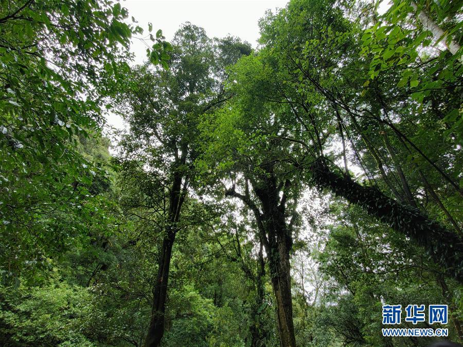 (圖文互動)(1)我國科學家在云南發現一植物新物種高黎貢球蘭