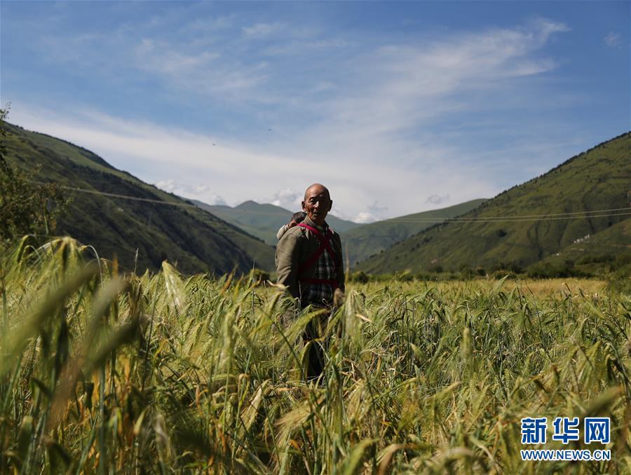 (新华全媒头条·图文互动)(6)命运的转折——写在四川甘孜藏族自治州建州70年之际