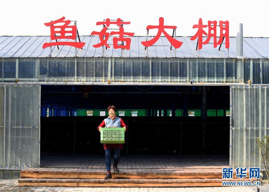 (決戰決勝脫貧攻堅·圖文互動)(5)17代人追逐的夢想實現了——記冀南平原劉秋口村變遷