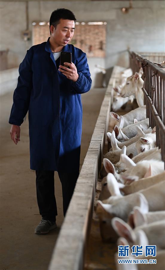 """(五中全會精神在基層·圖文互動)(4)大學生""""羊倌""""成了致富""""領頭羊"""""""