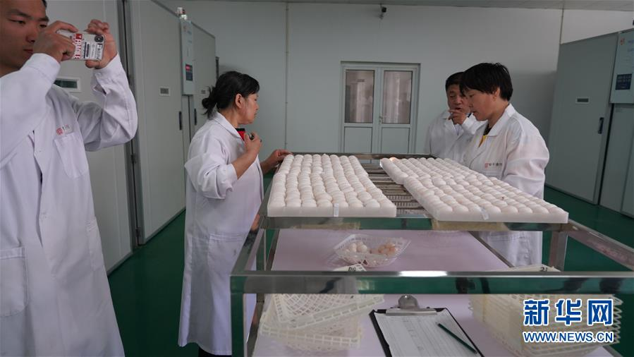 (新华全媒头条·图文互动)(3)在脱贫攻坚一线打一场首善标准的硬仗——北京东西部扶贫协作纪实