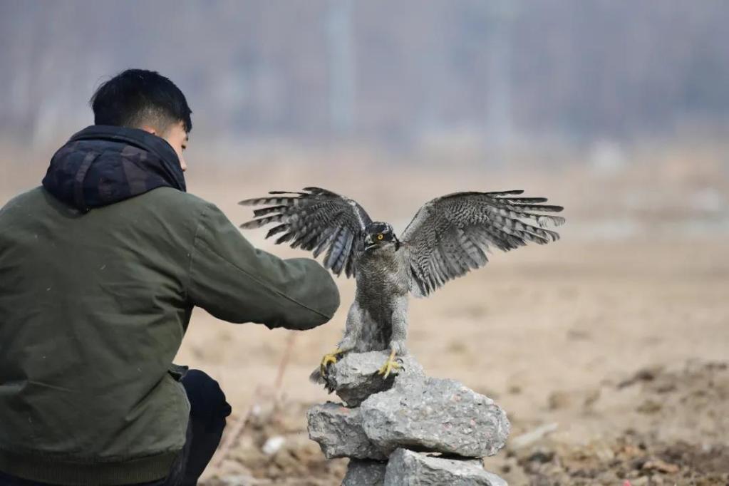 """国际爱鸟日:""""95后""""从500强企业辞职,选择成为一名""""猛禽康复师"""""""