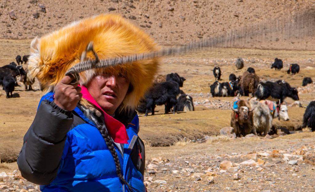 点赞!西藏农牧产品良种覆盖率持续扩大