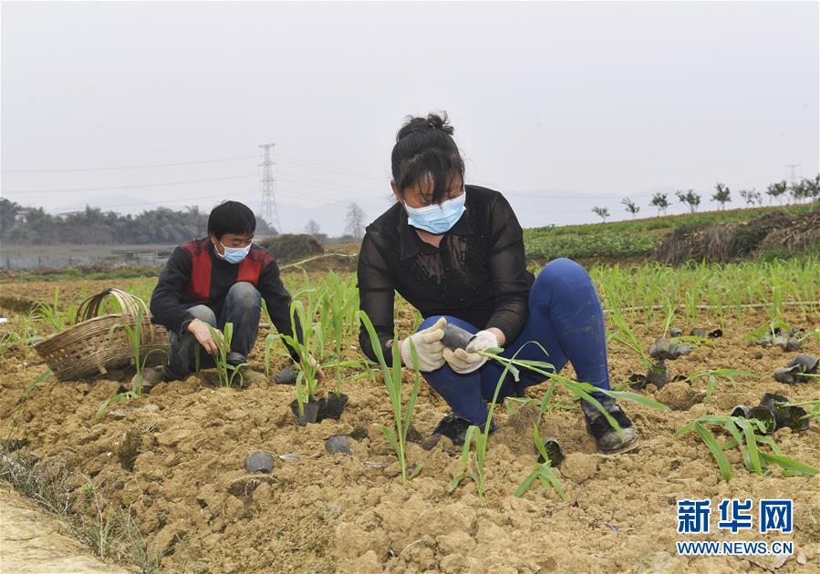 (在習近平新時代中國特色社會主義思想指引下——新時代新作為新篇章·習近平總書記關切事·圖文互動)(5)為農田注入硬核生産力——一些地方春耕中農業科技創新掃描