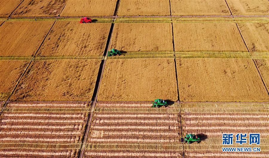 """(在习近平新时代中国特色社会主义思想指引下——新时代新作为新篇章·习近平总书记关切事·图文互动)(1)让农民挑上""""金扁担""""——农业现代化的生动实践扫描"""