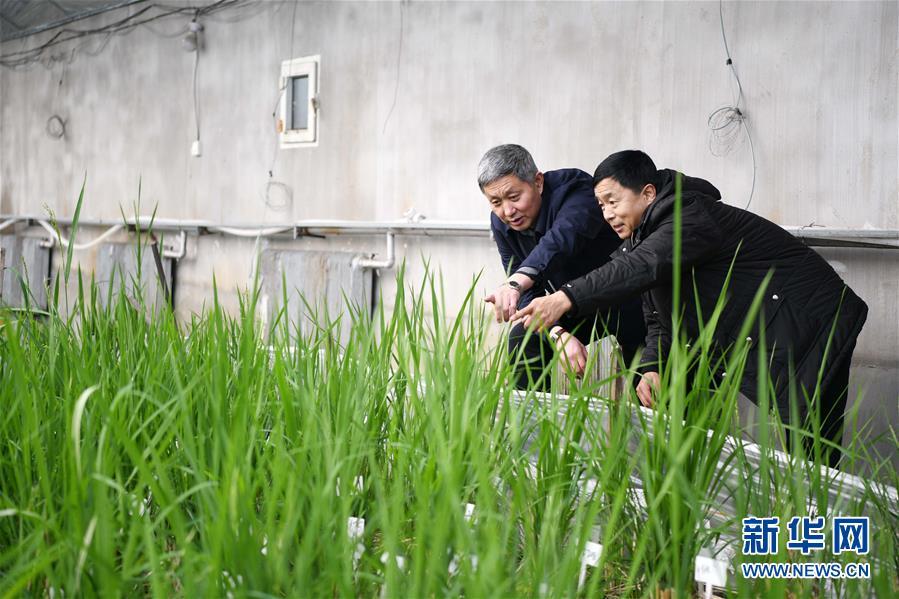 """(在习近平新时代中国特色社会主义思想指引下——新时代新作为新篇章·习近平总书记关切事·图文互动)(4)让农民挑上""""金扁担""""——农业现代化的生动实践扫描"""