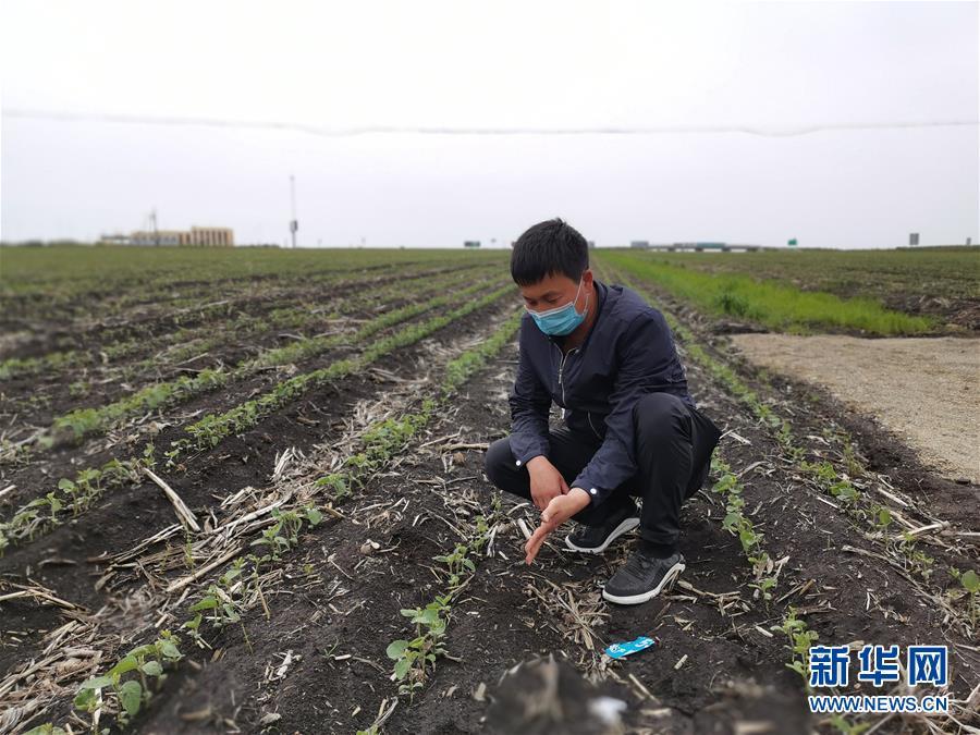 习近平总书记关切事丨让百姓吃得饱还要吃得好——夯实粮食安全基础端牢中国饭碗