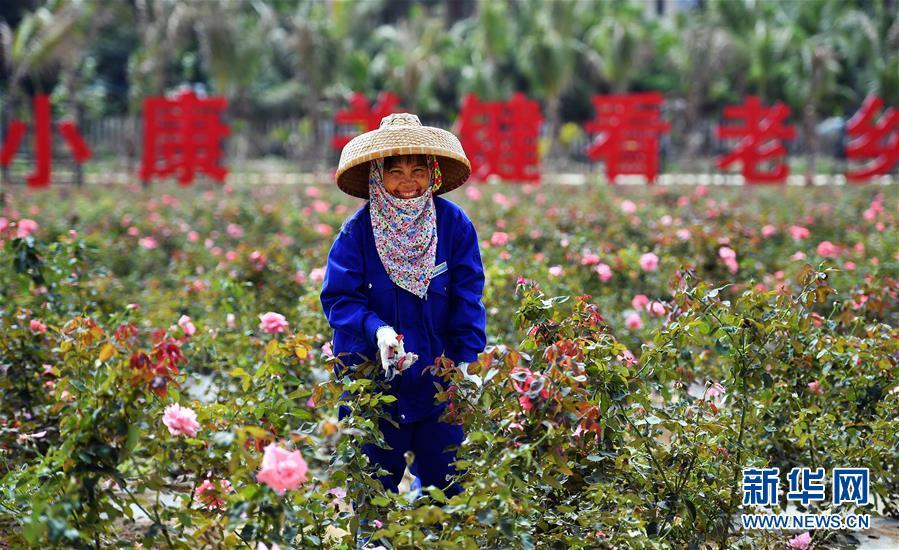 (新华全媒头条·图文互动)(12)创造新时代中国特色社会主义的更大奇迹——以习近平同志为核心的党中央关心经济特区发展纪实