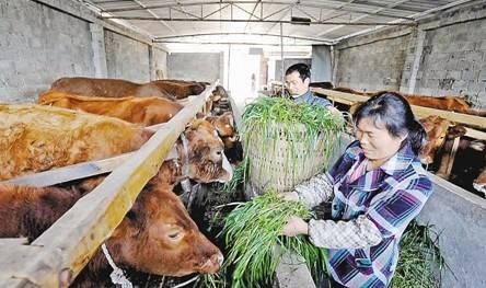 重慶微企總數增至11.83萬戶 帶動和解決就業88.85萬人