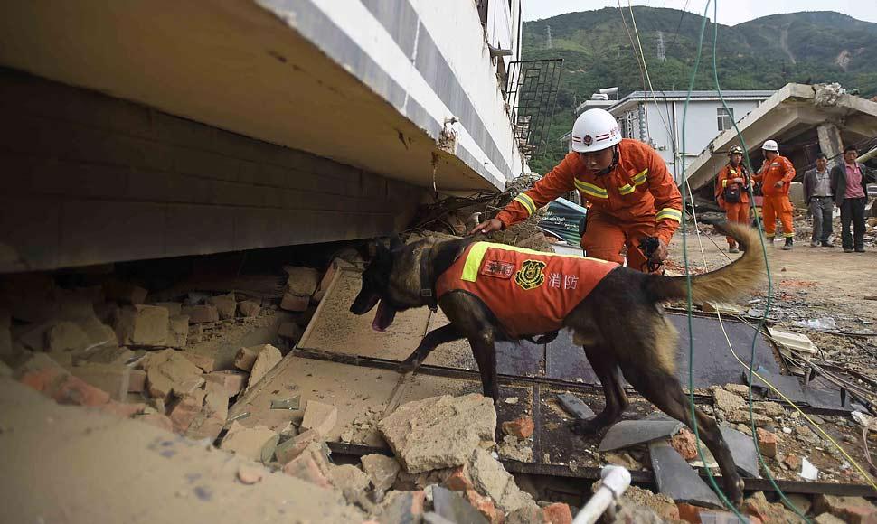 搜救犬全力尋找幸存者