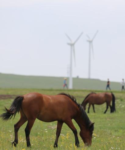 盛夏时节 内蒙古辉腾锡勒草原处处皆美景