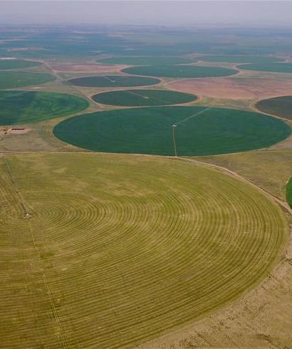 """科尔沁沙地上飘动着""""绿海"""""""