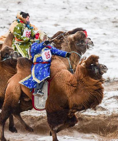 雪域草原赛骆驼