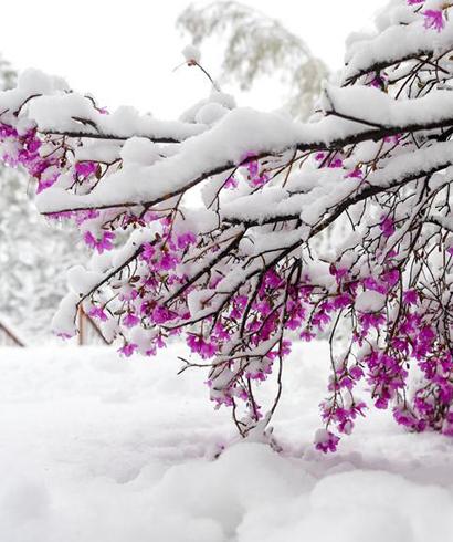 立夏时节 雪景如画
