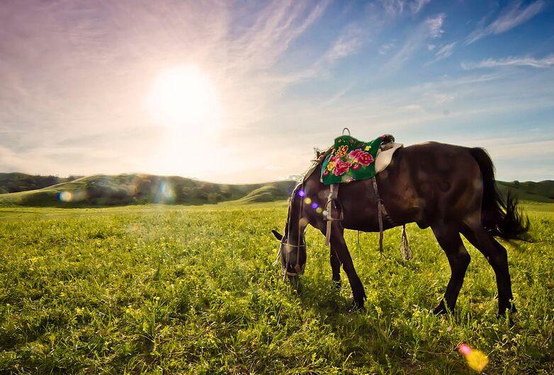 内蒙古首个旅游在线解纷平台在兴安盟开通