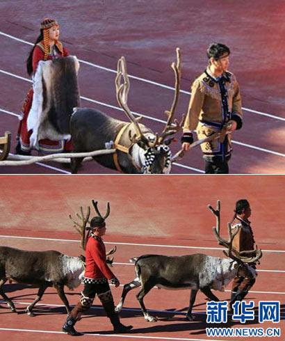 带着驯鹿参加运动会是怎样的体验