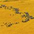 追寻70年印记丨网民眼中多姿多彩的内蒙古