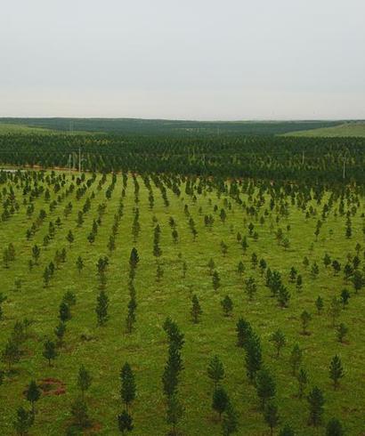 内蒙古初步建成横跨我国三北的生态屏障