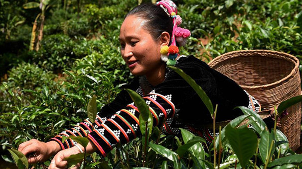 雲南普洱:五年累計減少貧困人口52.7萬人