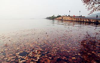 西湖落葉 堪比油畫