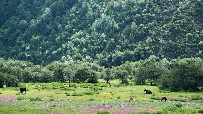 """普达措国家公园村民的""""生态转身"""""""