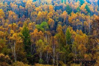 塞罕壩林場石質荒山攻堅造林