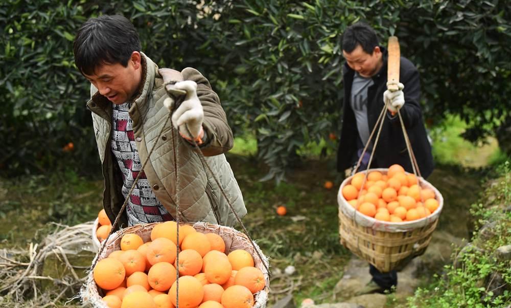 """一個橙子的八年""""蛻變史"""""""