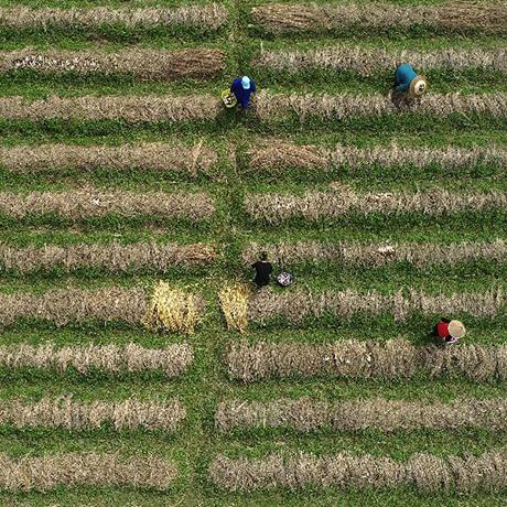 這裏的農民為何越來越年輕?
