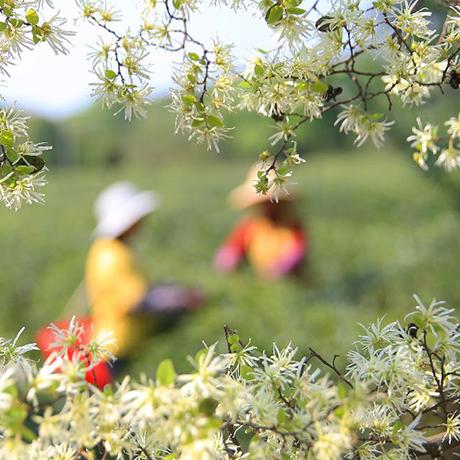 一個湘南山村的生態轉型探索