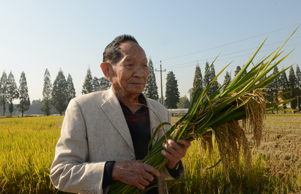 袁隆平:一顆稻谷裏的愛國情懷