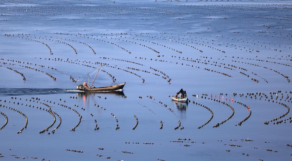 遼寧長海:海洋牧場收獲忙
