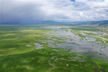 水草豐美的藏北牧場