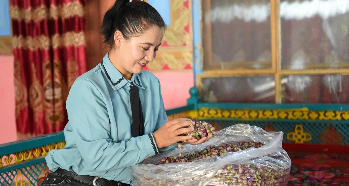 """種植""""浪漫""""收獲財富——沙漠玫瑰為新疆和田農戶鋪就脫貧路"""