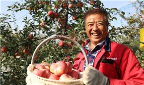 """""""蘋果之鄉""""蘋果紅了"""