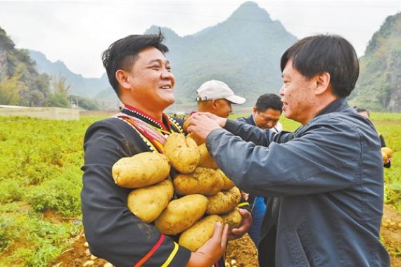 """""""農民院士""""朱有勇:將論文寫在大地 把農民裝在心中"""