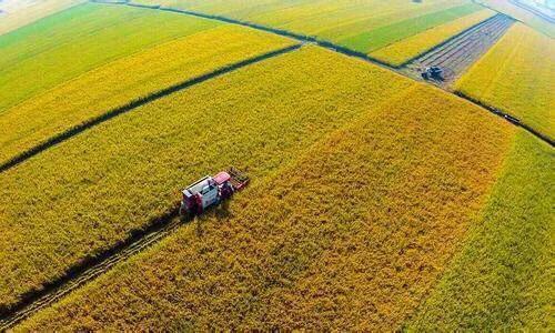 情係三農,在希望的土地上播撒綠色夢想
