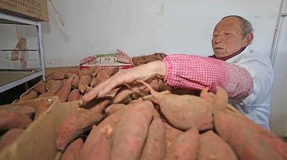 遼寧康平:多項舉措共同發力,助力農民脫貧致富
