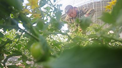 遼寧康平:助力農民脫貧致富