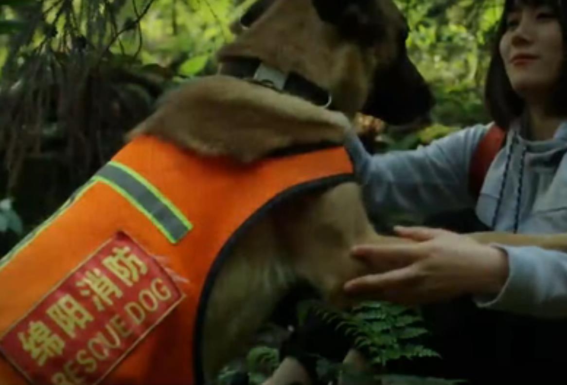 全國防災減災日|無言的戰士 忠誠的夥伴——搜救犬