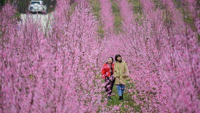 陕南地区多措并举助农增收