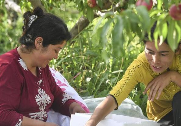 新疆疏附:蜜桃種植助農增收致富