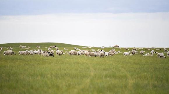 草原有了网,手机能放羊