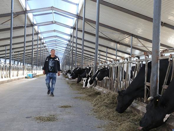 百年养牛大镇的产业进阶路