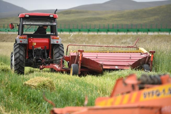 青海果洛藏族自治州玛沁县大武乡格多村饲草种植基地