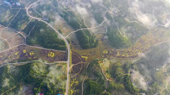 百城千縣萬村調研行|在三峽橘鄉,遇見最美的田園時光!