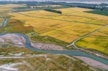 """荒漠林海生新""""芽"""":新疆阿克苏柯柯牙绿化工程再升级"""
