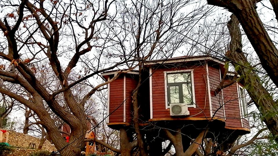 """山东蒙阴:""""树上""""的风景"""